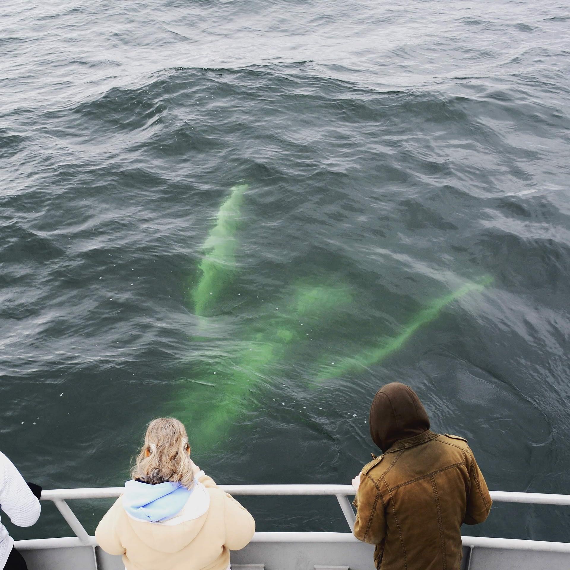 Humpback Whales 7