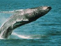 About Whale Sense