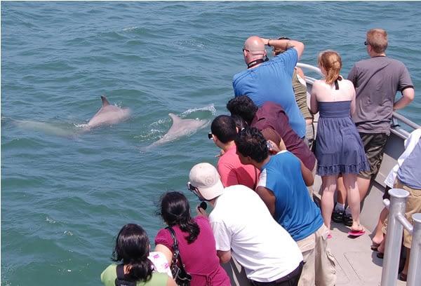 Bottlenose Dolphins 11
