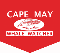The Cape May Whale Watcher