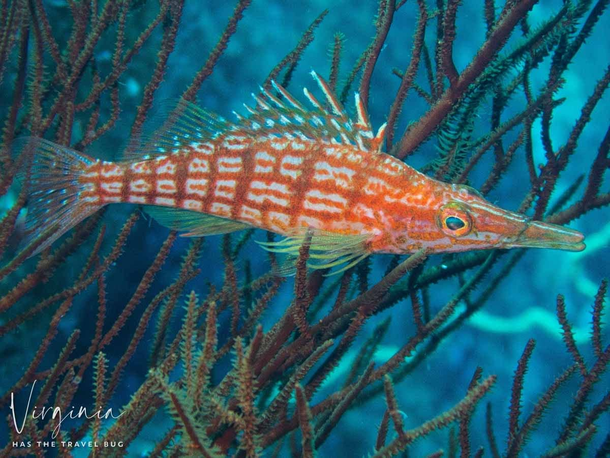 Scuba-Diving-Hawaii- -Kona-Honu-Divers-108
