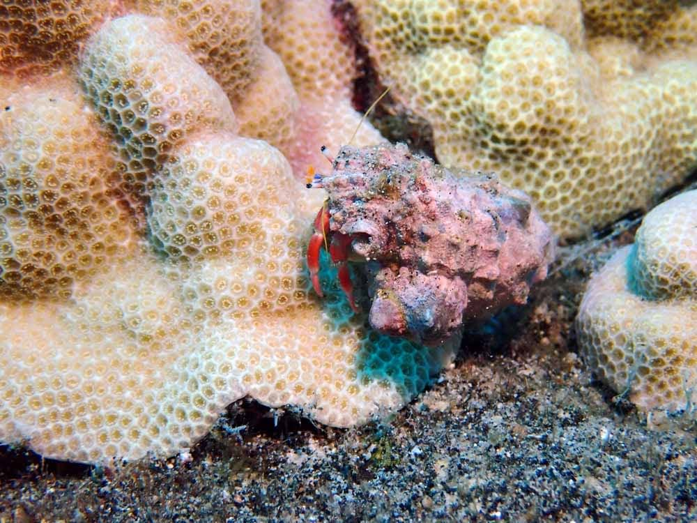 Scuba-Diving-Hawaii-Kona-Honu-Divers-43