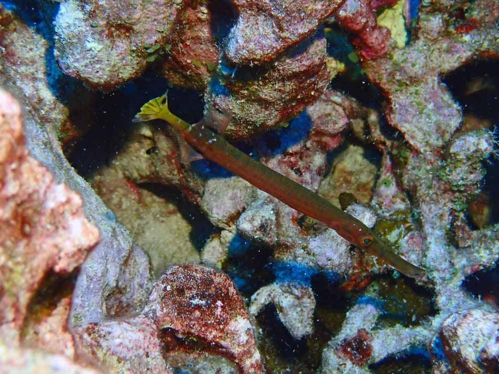 Scuba-Diving-Hawaii-Kona-Honu-Divers-35