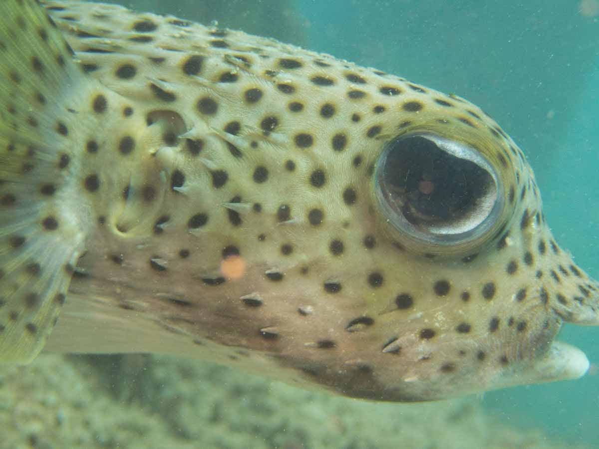 Scuba-Diving-Hawaii- -Kona-Honu-Divers-101
