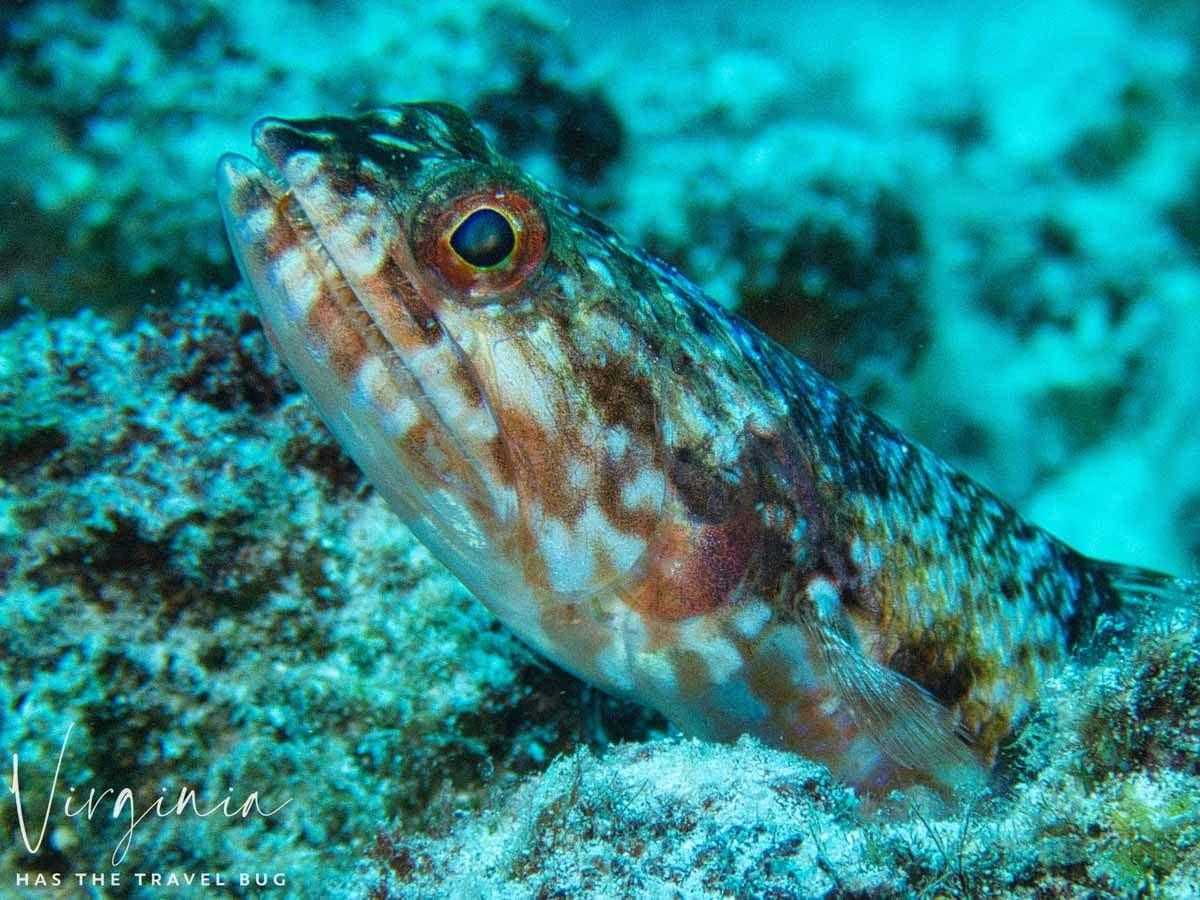 Scuba-Diving-Hawaii- -Kona-Honu-Divers-107