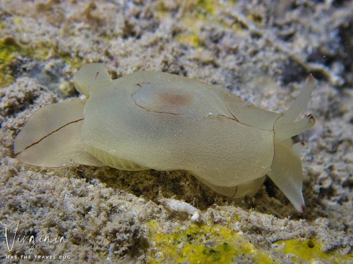 Scuba-Diving-Hawaii- -Kona-Honu-Divers-81