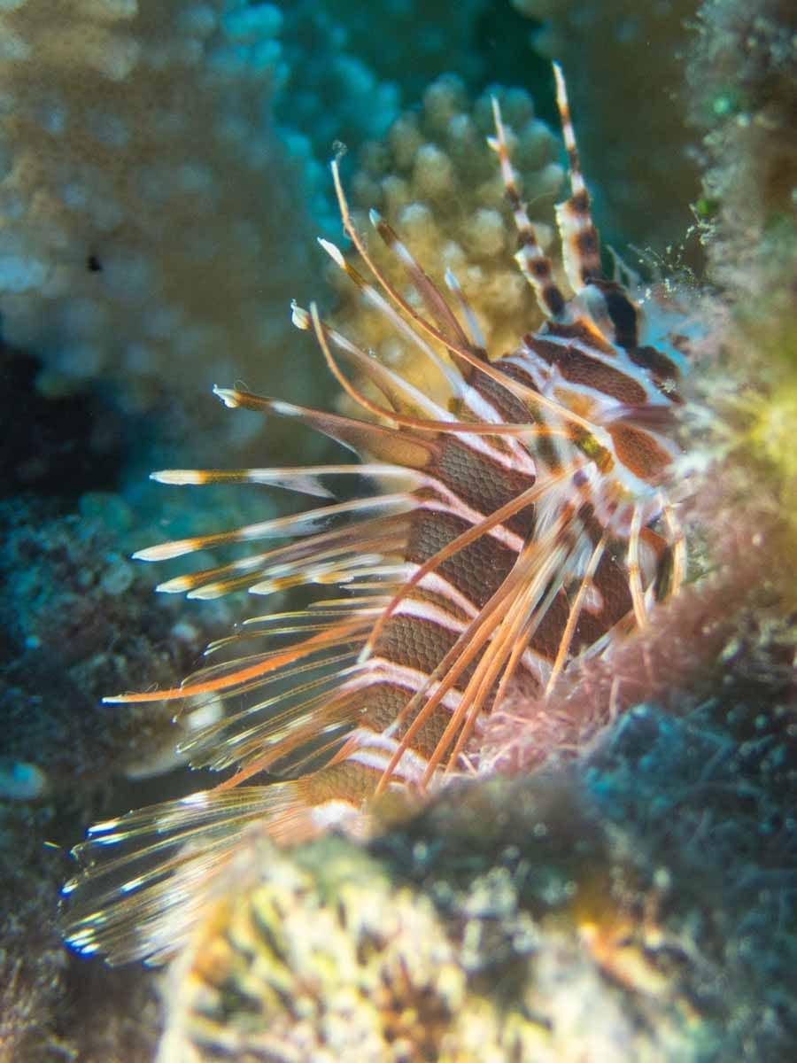 Scuba-Diving-Hawaii- -Kona-Honu-Divers-98