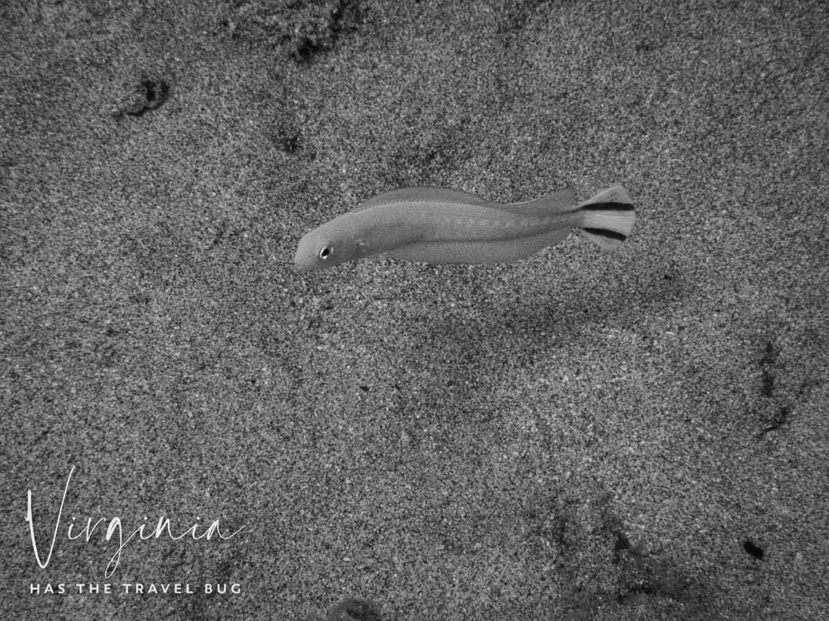 Scuba-Diving-Hawaii- -Kona-Honu-Divers-131