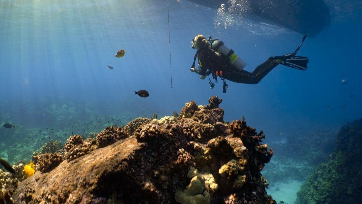 Scuba Diving Hawaii with Kona Honu Divers