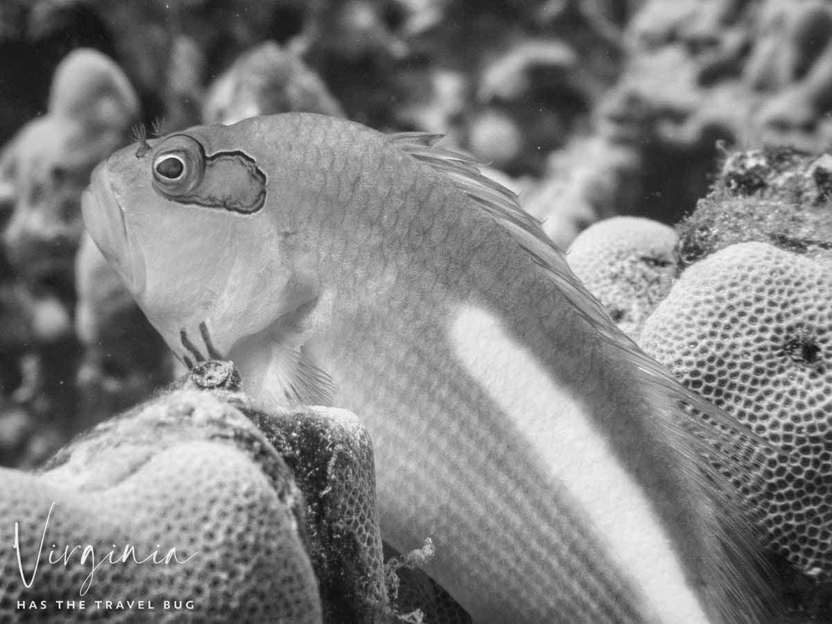 Scuba-Diving-Hawaii- -Kona-Honu-Divers-82