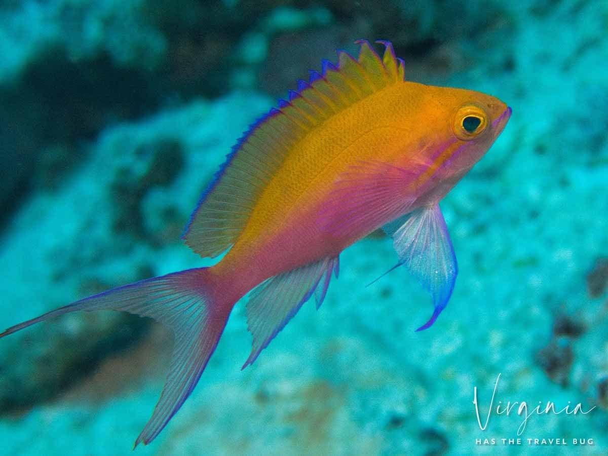 Scuba-Diving-Hawaii- -Kona-Honu-Divers-84