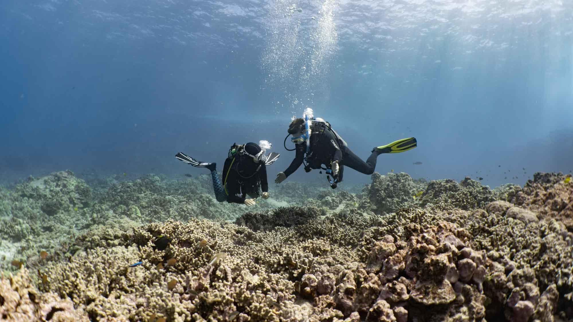 Scuba-Diving-Hawaii-Kona-Honu-Divers-21