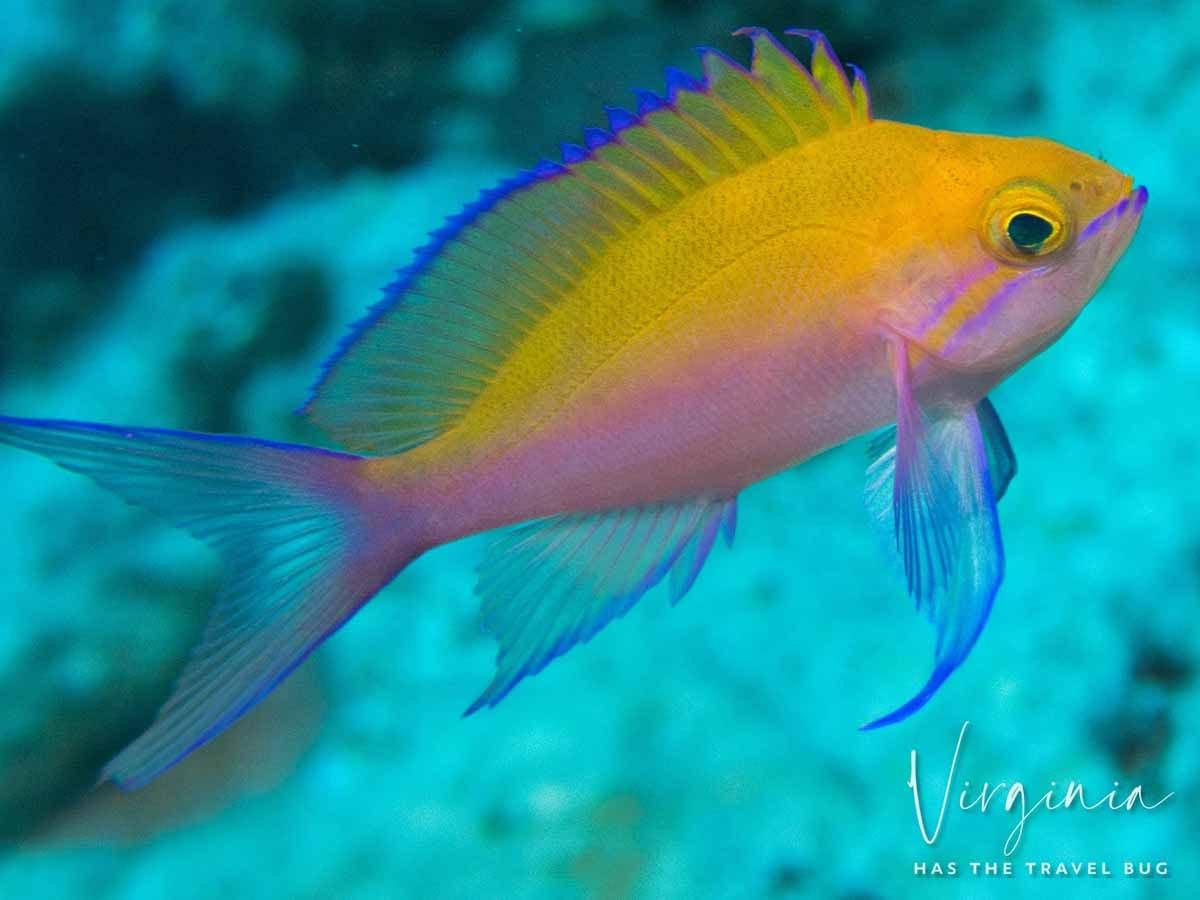 Scuba-Diving-Hawaii- -Kona-Honu-Divers-83