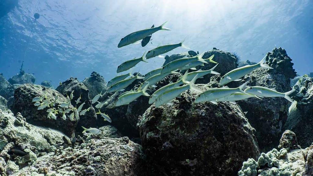 Diving in Kona Hawaii with Kona Honu Divers