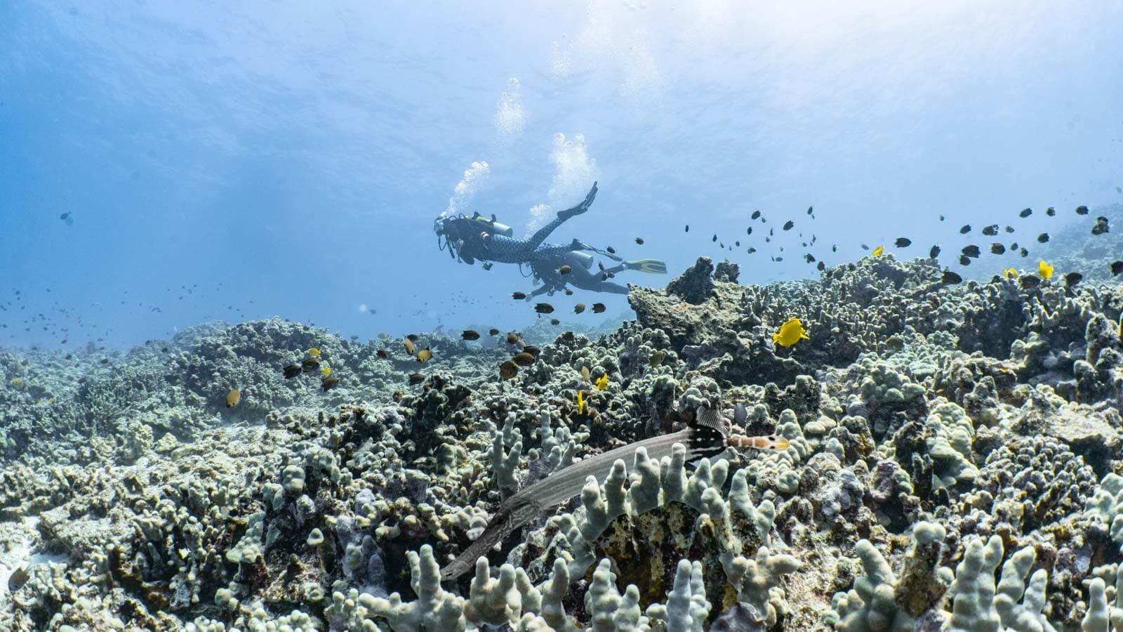 Scuba-Diving-Hawaii-Kona-Honu-Divers-23