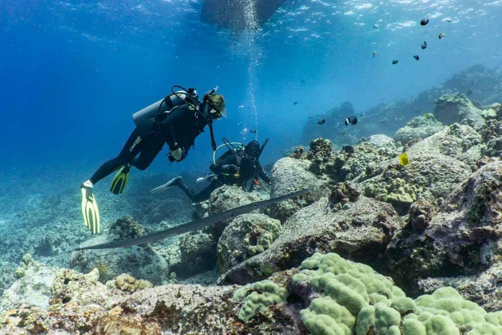 Scuba Dive in Hawaii with Kona Kona Honu Divers