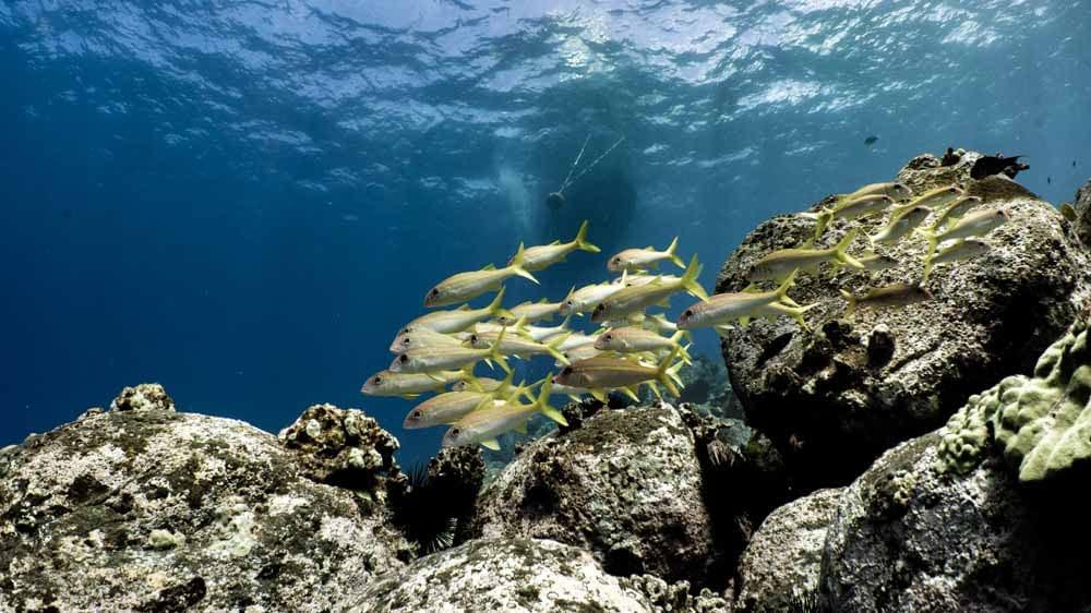 Shore Diving Big Island   Kona Honu Divers