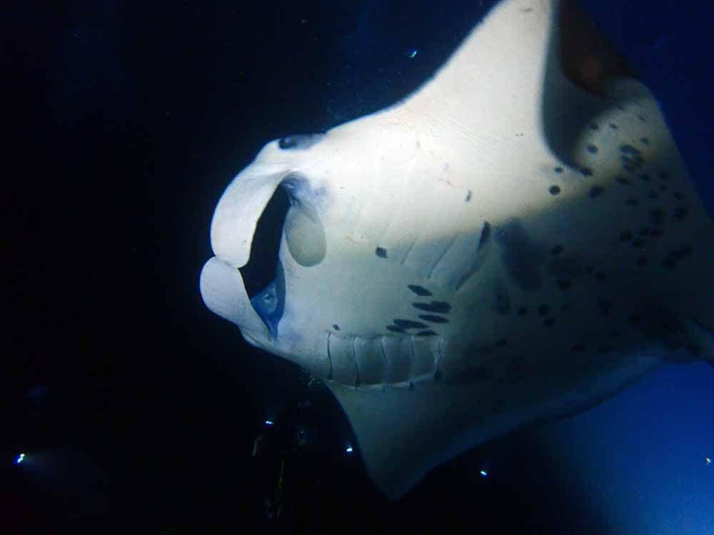 Scuba-Diving-Hawaii-Kona-Honu-Divers-45