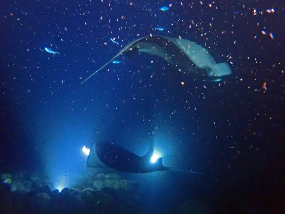 Scuba-Diving-Hawaii-Kona-Honu-Divers-55