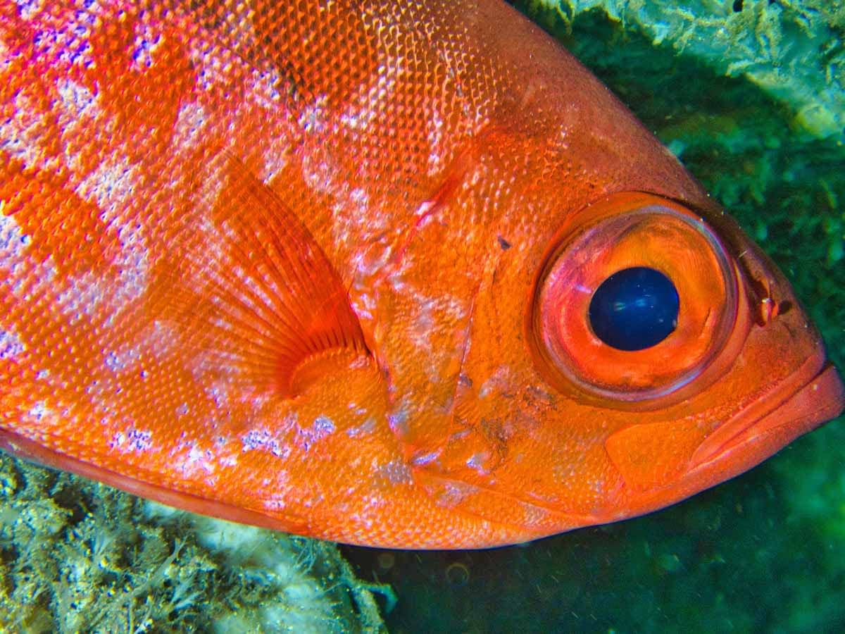 Scuba-Diving-Hawaii- -Kona-Honu-Divers-104