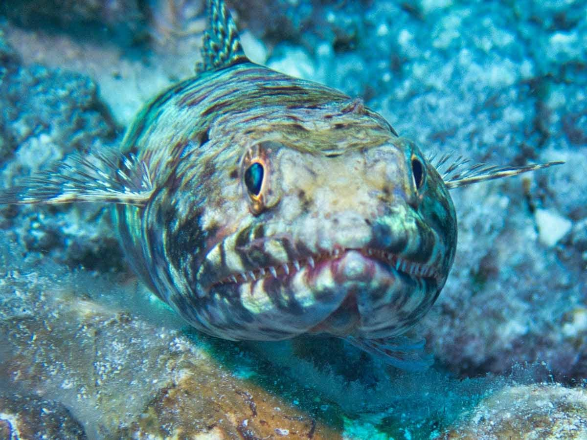 Scuba-Diving-Hawaii- -Kona-Honu-Divers-127