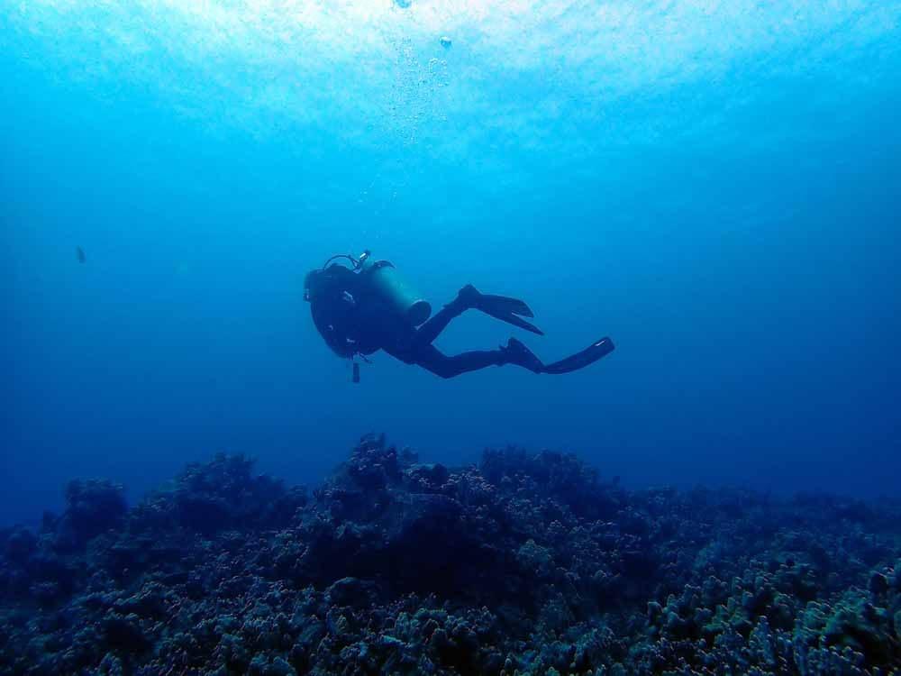 Scuba-Diving-Hawaii-Kona-Honu-Divers-36