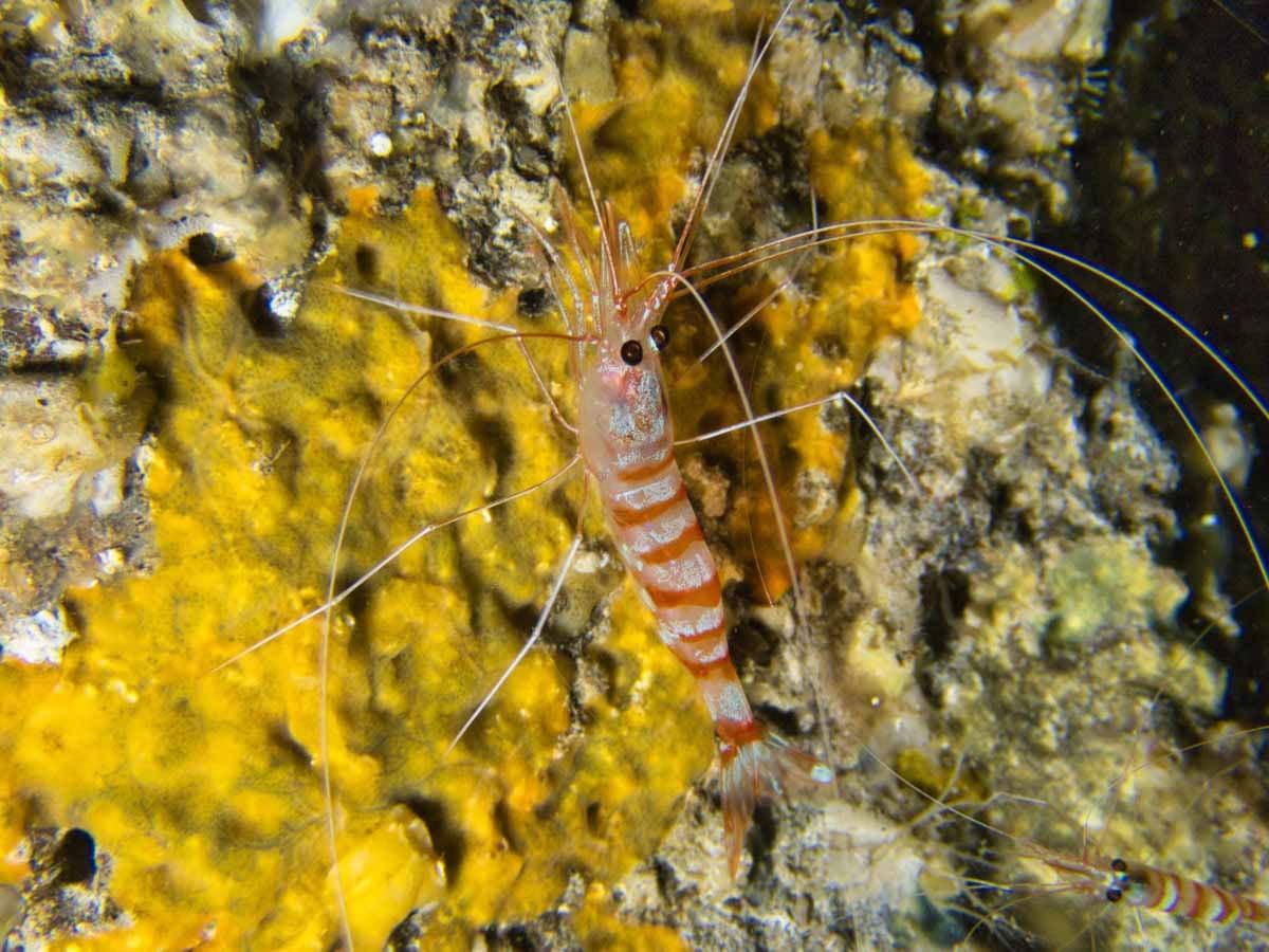 Scuba-Diving-Hawaii- -Kona-Honu-Divers-121
