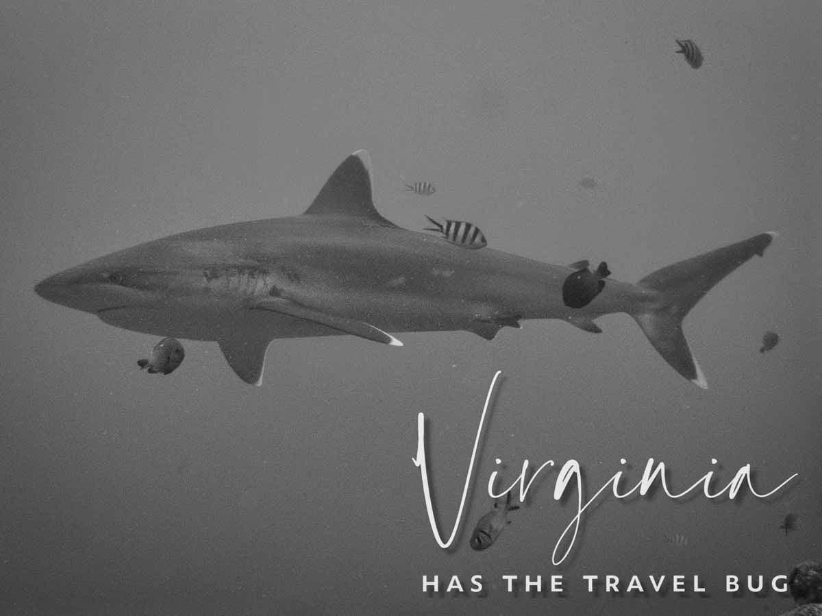 Scuba-Diving-Hawaii- -Kona-Honu-Divers-129