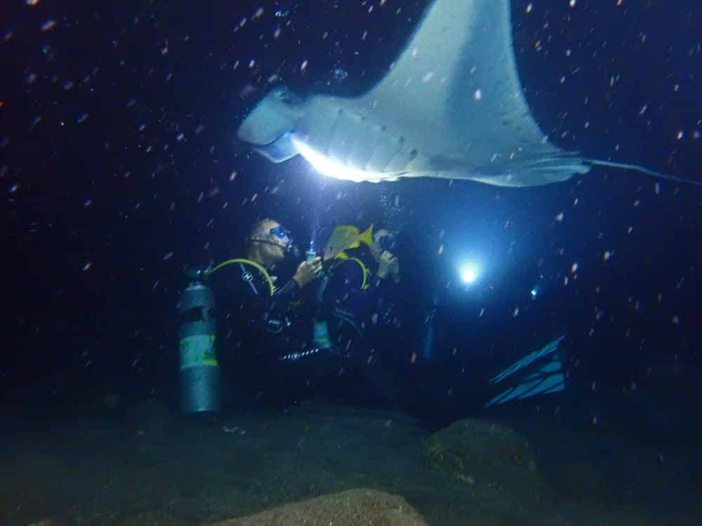 Scuba-Diving-Hawaii-Kona-Honu-Divers-33