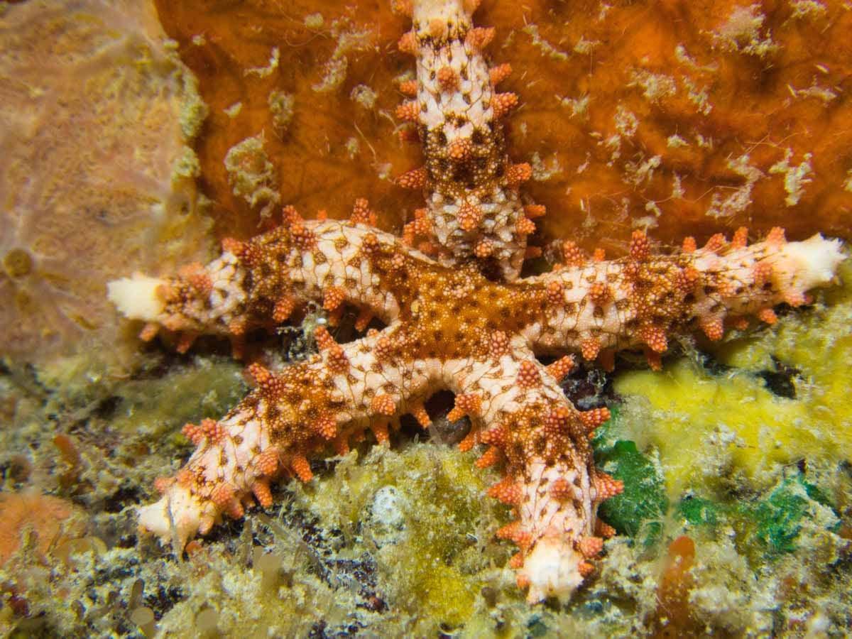 Scuba-Diving-Hawaii- -Kona-Honu-Divers-126