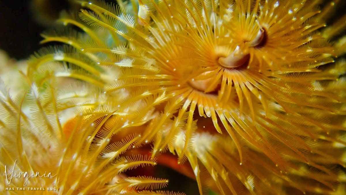 Scuba-Diving-Hawaii- -Kona-Honu-Divers-88