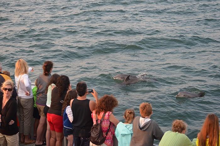 Bottlenose Dolphins 12
