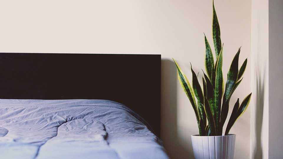 Study Shows Apnea Treatments Improve Veteran's Sleep Quality