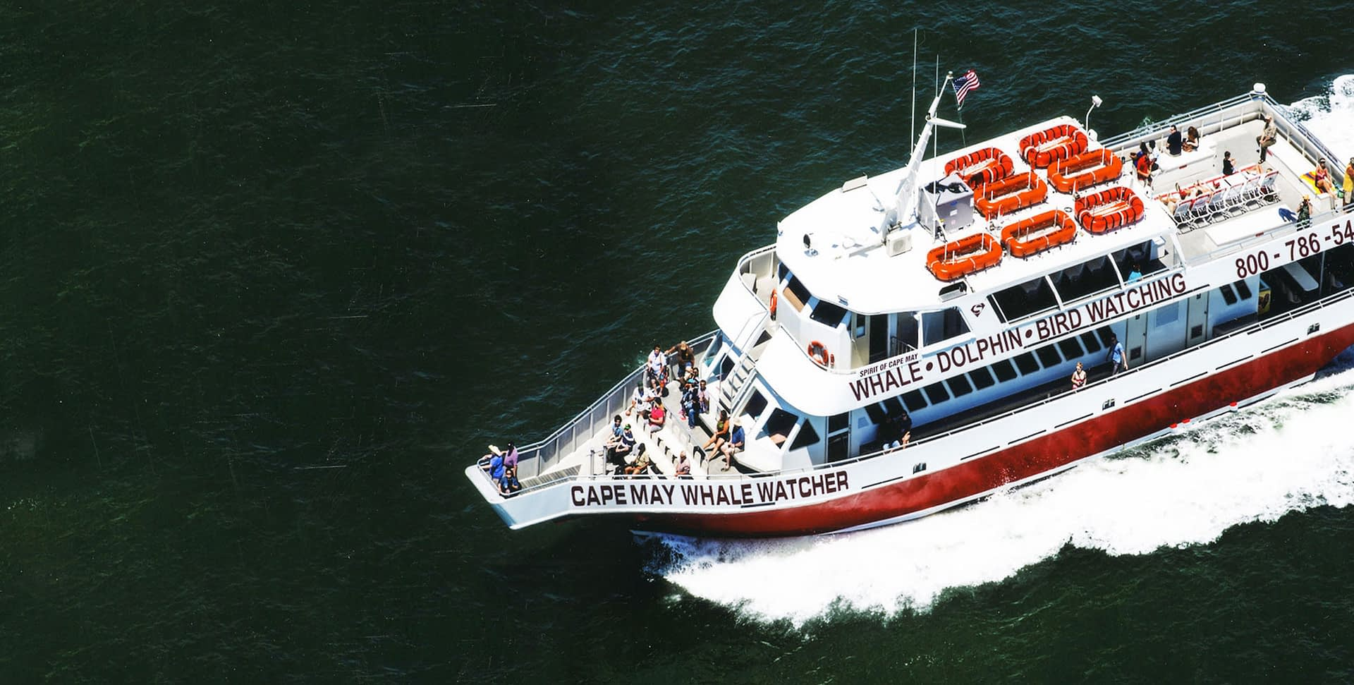 Whale Watching & Dolphin Watching Cruises in Cape May, NJ