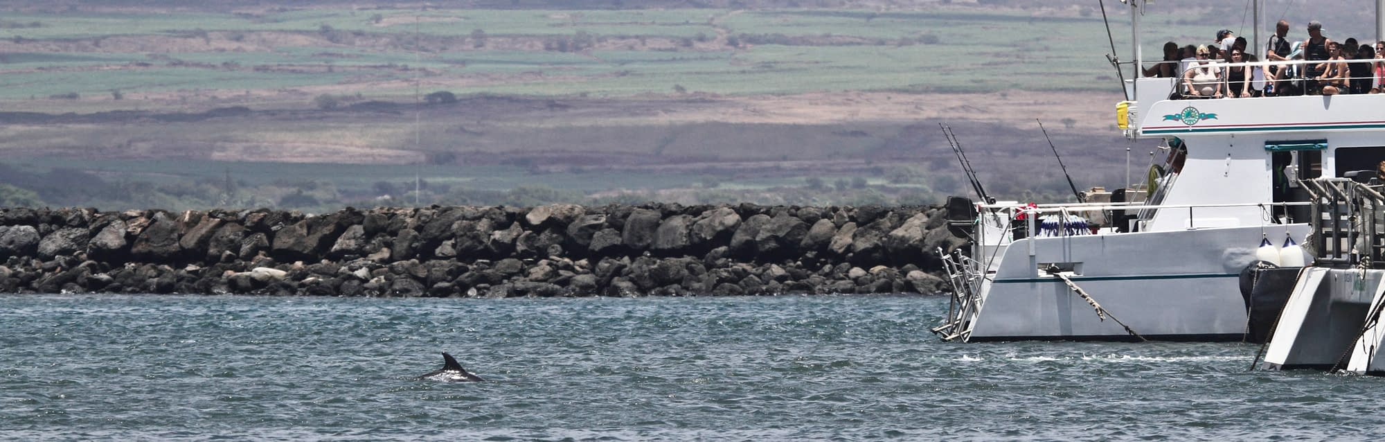 Bottlenose dolphin in Maalaea Harbor