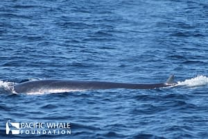 Brydes Whale_resize