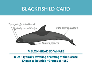 Blackfish ID card