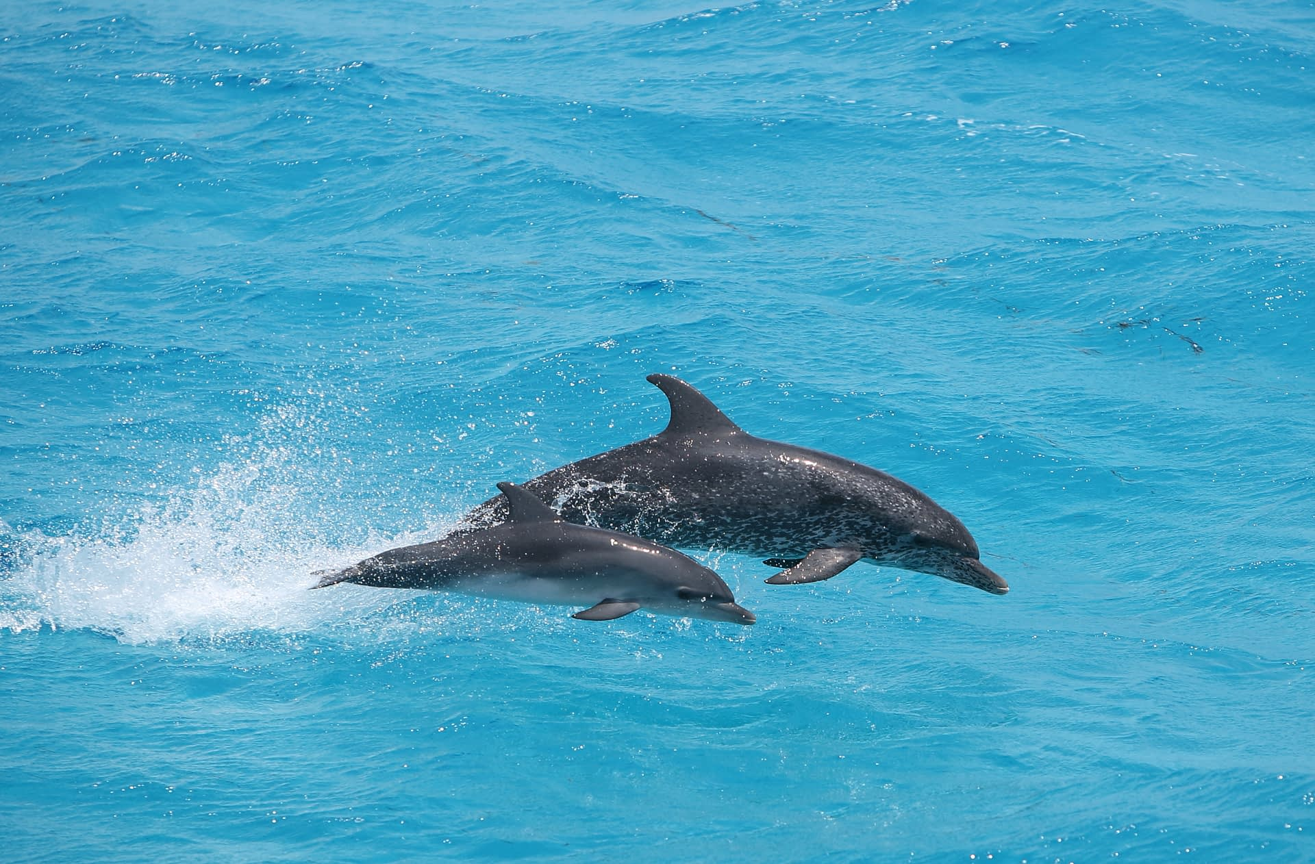 Captain's Choice Dolphin Watch & Sunset Sail